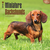 Miniature Dachshunds - 2016 Calendar Calendars