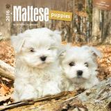 Maltese Puppies - 2016 Mini Wall Calendar Calendars