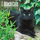 Black Cats - 2016 Calendar Calendarios