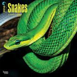 Snakes - 2016 Calendar Calendars