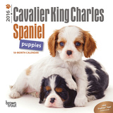 Cavalier King Charles Spaniel Puppies - 2016 Mini Wall Calendar Calendars