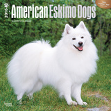 American Eskimo Dogs - 2016 Calendar Calendars