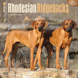 Rhodesian Ridgebacks - 2016 Calendar Calendars
