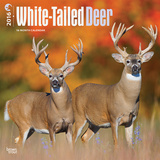 White-Tailed Deer - 2016 Calendar Calendars