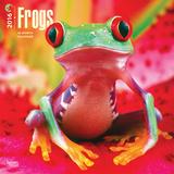 Frogs - 2016 Calendar Calendars