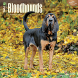 Bloodhounds - 2016 Calendar Calendars