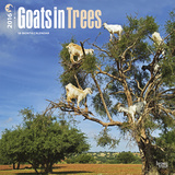 Goats in Trees - 2016 Calendar Calendarios