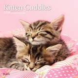 Kitten Cuddles - 2016 Calendar Calendars