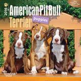 American Pit Bull Terrier Puppies - 2016 Mini Wall Calendar Calendars