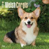 Welsh Corgis - 2016 Calendar Calendars
