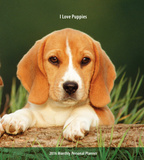I Love Puppies - 2016 Monthly Planner Calendars