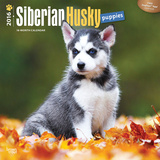 Siberian Husky Puppies - 2016 Calendar Calendars