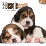 Beagle Puppies - 2016 Mini Wall Calendar Calendars