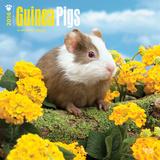 Guinea Pigs - 2016 Calendar Calendars