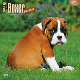 Boxer Puppies - 2016 Calendar Calendars