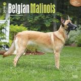 Belgian Malinois - 2016 Calendar Calendars