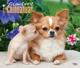 For the Love of Chihuahuas - 2016 Calendar Calendars