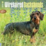 Wirehaired Dachshunds - 2016 Calendar Calendars