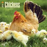 Chickens - 2016 Calendar Calendars