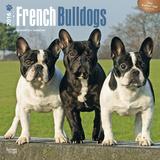 French Bulldogs - 2016 Calendar Calendars