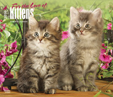 For the Love of Kittens - 2016 Calendar Calendars
