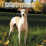 Greyhounds, Italian - 2016 Calendar Calendars