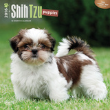Shih Tzu Puppies - 2016 Calendar Calendars