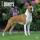 Boxers - 2016 Calendar Calendars