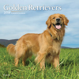 Golden Retrievers - 2016 Calendar Calendars