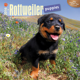 Rottweiler Puppies - 2016 Mini Wall Calendar Calendars