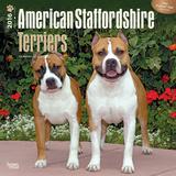 American Staffordshire Terriers - 2016 Calendar Kalendarze