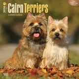 Cairn Terriers - 2016 Calendar Calendars