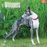 Whippets - 2016 Calendar Calendars