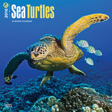 Sea Turtles - 2016 Calendar Calendars