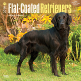 Flat-Coated Retrievers - 2016 Calendar Calendars