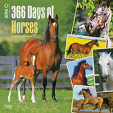 365 Days of Horses - 2016 Calendar Calendars