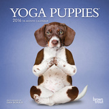 Yoga Puppies - 2016 Mini Wall Calendar Calendars