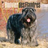 Bouvier des Flandres - 2016 Calendar Calendars