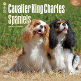 Cavalier King Charles Spaniels - 2016 Calendar Calendriers