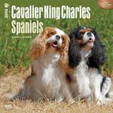 Cavalier King Charles Spaniels - 2016 Calendar Calendars