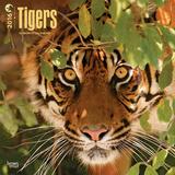 Tigers - 2016 18 Month Calendar Calendars