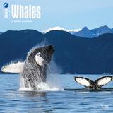 Whales - 2016 Calendar Calendars