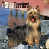Silky Terriers - 2016 Calendar Calendars