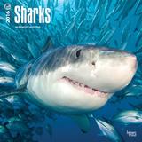 Sharks - 2016 Calendar Calendars