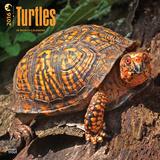 Turtles - 2016 Calendar Calendars