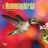 Hummingbirds - 2016 Mini Wall Calendar Calendars