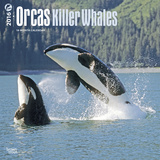 Orcas, Killer Whales - 2016 Calendar Calendars