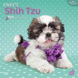 Sweet Shih Tzu - 2016 Calendar Calendars