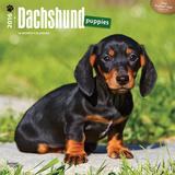 Dachshund Puppies - 2016 Calendar Calendars
