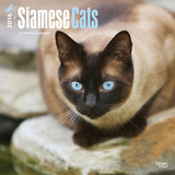 Siamese Cats - 2016 Calendar Calendars